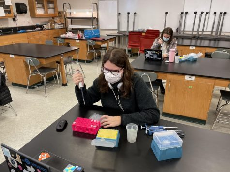 Hybrid students in Genetics work on a new lab.