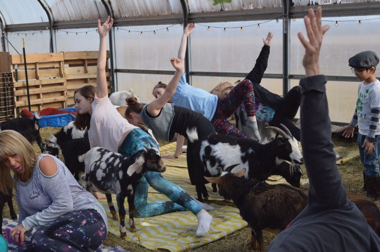 VHHS+students+visit+Kamins+Farm+Sanctuary+for+goat+yoga.+
